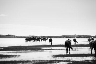 IslandpferdeInIsland-81