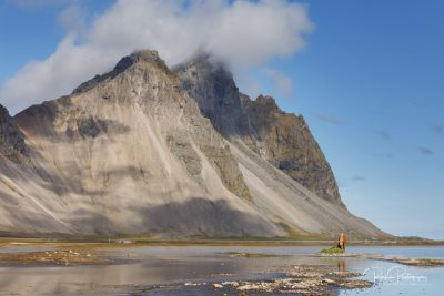 IslandpferdeInIsland-84