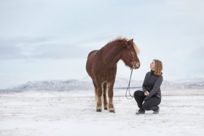 IslandpferdeInIsland-85