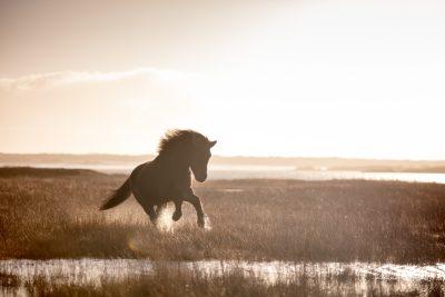 IslandpferdeInIsland-86