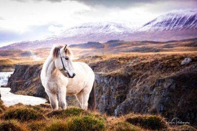 IslandpferdeInIsland-98