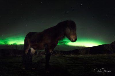 IslandpferdeInIsland-99