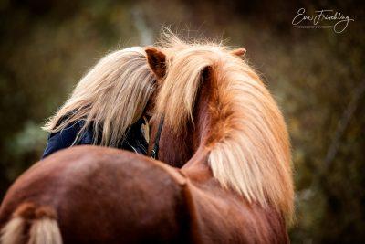 Mensch&Pferd_2019-12
