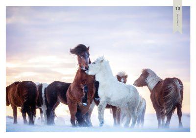 Pferde-10