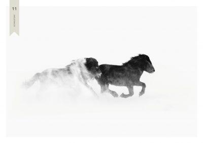 Pferde-11