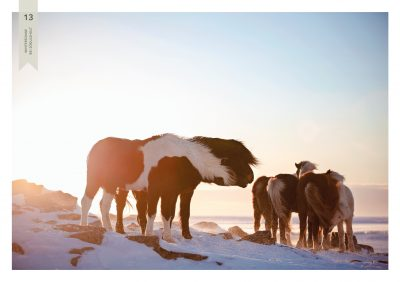 Pferde-13
