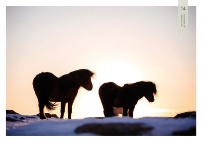 Pferde-14