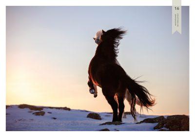 Pferde-16