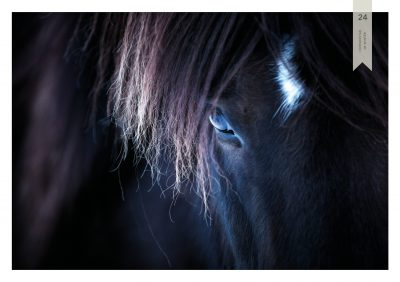 Pferde-24