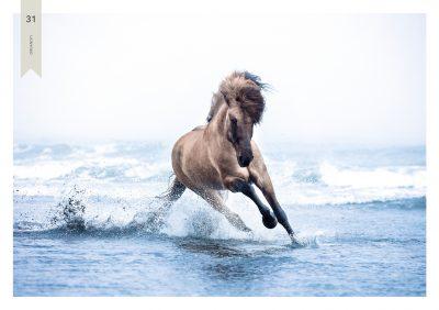 Pferde-31