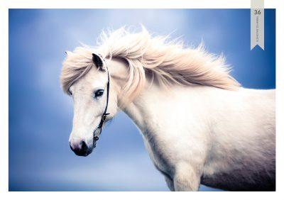 Pferde-36