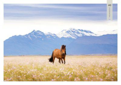 Pferde-40