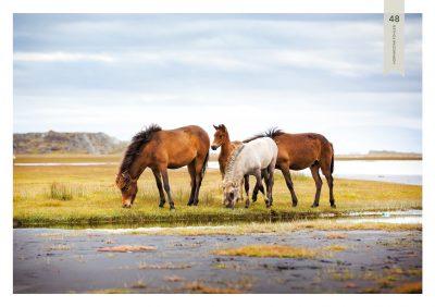 Pferde-48
