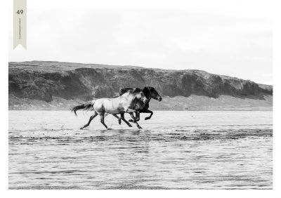 Pferde-49