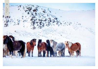 Pferde-5