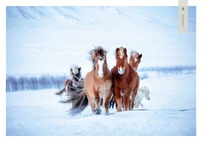 Pferde-6