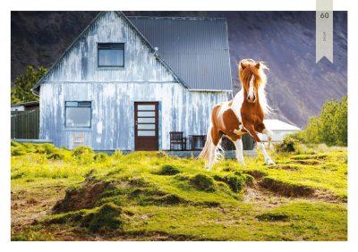 Pferde-60
