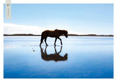 Pferde-61