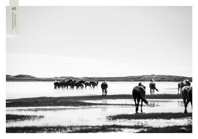Pferde-65