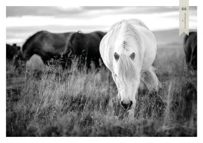 Pferde-66