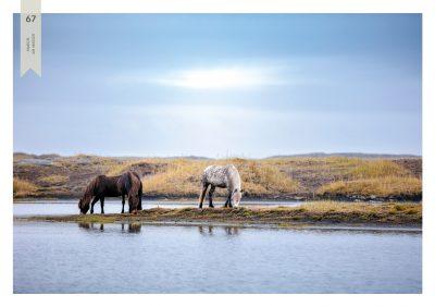 Pferde-67