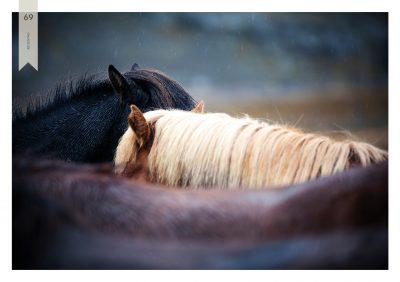 Pferde-69