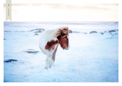 Pferde-7