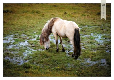Pferde-72