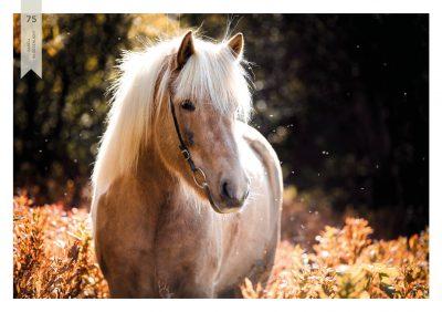 Pferde-75