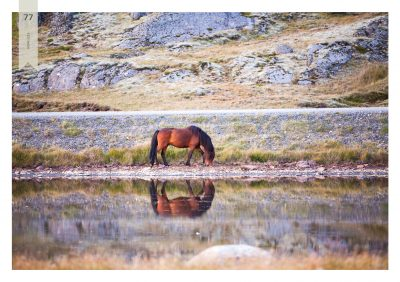 Pferde-77