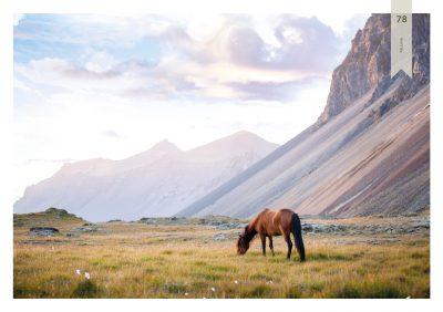Pferde-78