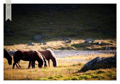 Pferde-79