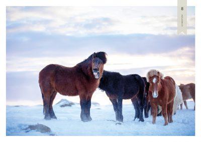 Pferde-8