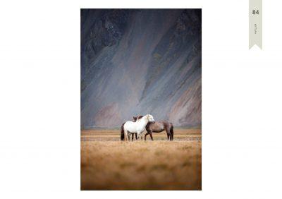 Pferde-84