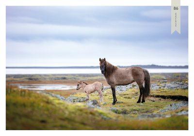Pferde-86
