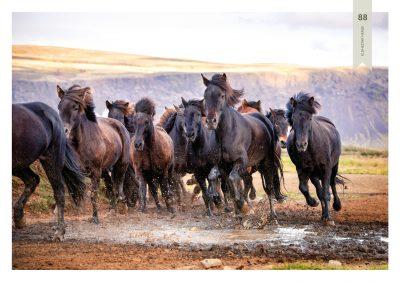 Pferde-88