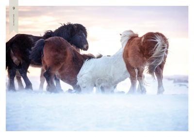 Pferde-9