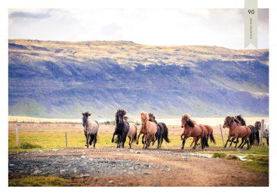 Pferde-90