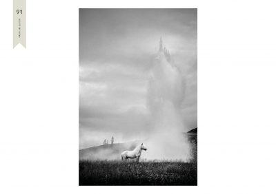 Pferde-91