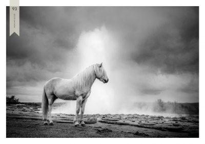 Pferde-93