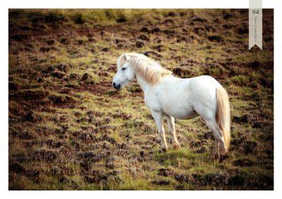 Pferde-94