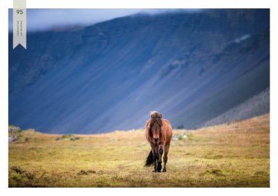 Pferde-95