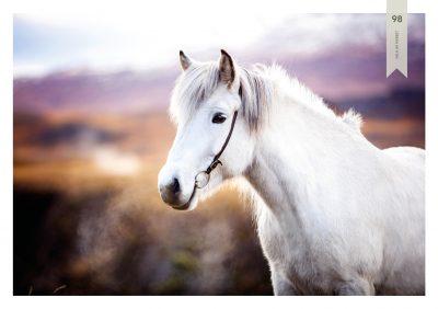 Pferde-98