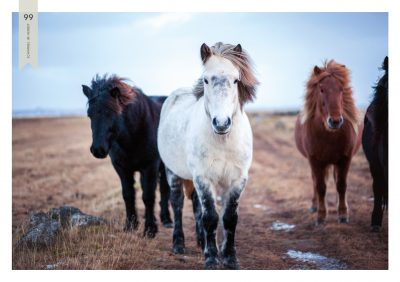 Pferde-99