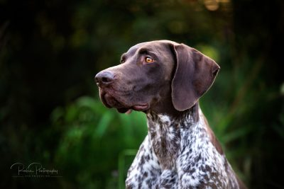 Tiere_2019-1