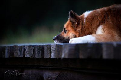 Tiere_2019-3