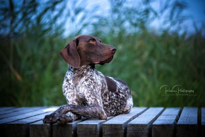 Tiere_2019-4