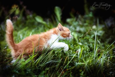 Tiere_2019-5