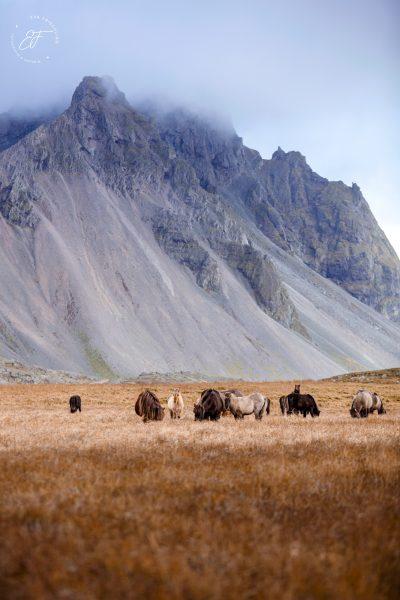 04 Hornhestar große Herde-10