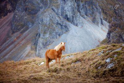 04 Hornhestar große Herde-2